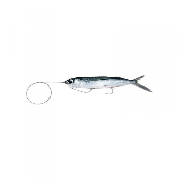 Baitmasters Rigged Flying Fish Case